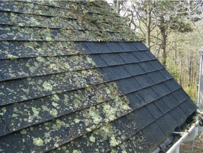 roof clean, roof cleaning, soft wash cabin, chinking, log stain, pressure wash roof, soft wash log cabin